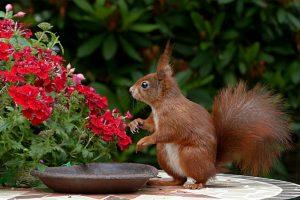 Read more about the article La faune du jardin: les animaux que votre enfant peut voir dans un jardin sauvage