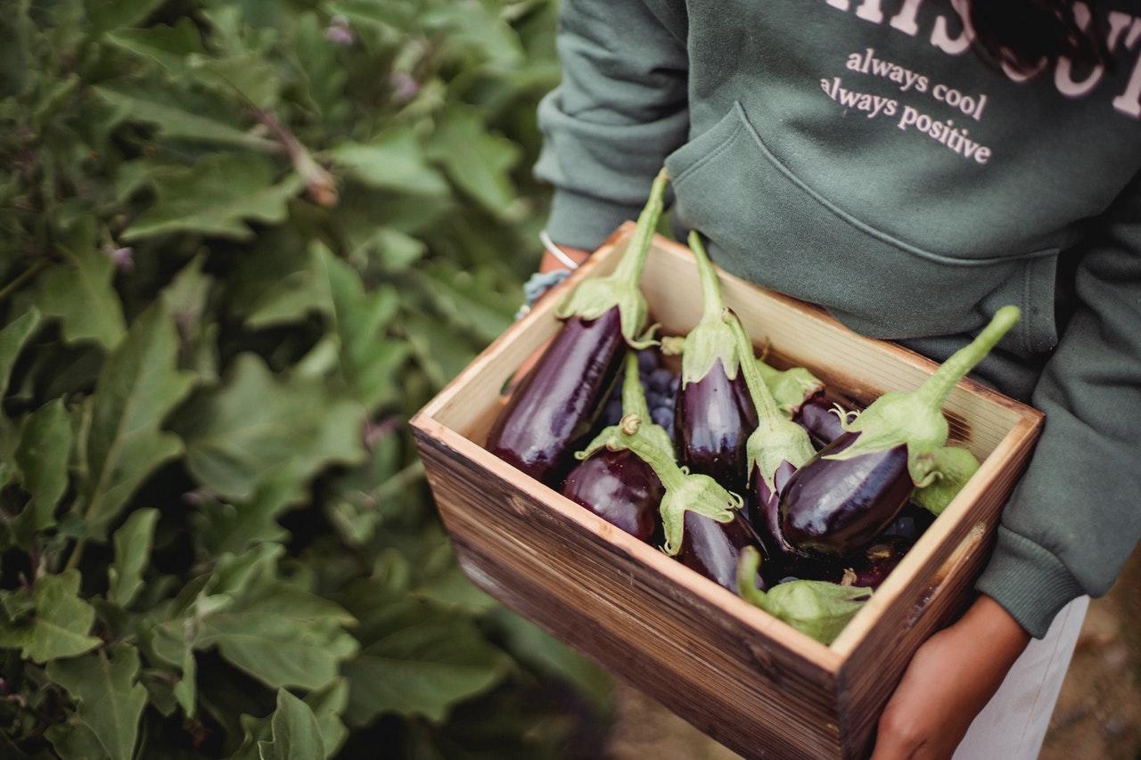 Read more about the article Faire pousser des plantes en conteneurs avec les enfants